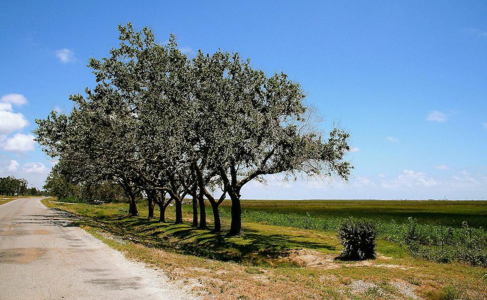 Tree Line and Coastal Marsh