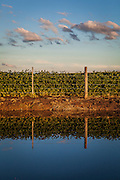 2015/03/03 – Monte Maiz, Argentina: A field of soy in the area of Monte Maiz, border for signs of recent flood. Nowadays soil can't absorb much water since pestifies make it harder and less absorvent. Another reason is that soy needs less water than other crops, so the water under the soil its just a mere 30cm from the surface making floods common when rain falls. (Eduardo Leal)