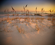 Beach grasses stick up out of sand dunes that line the ocean in the southeast