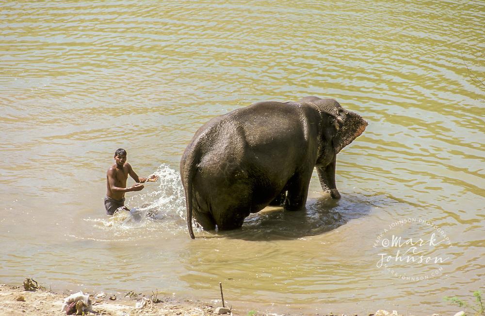 India, Rajasthan, Jaipur, Amber Fort, man washing elephant.