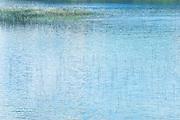 reeds in water 2 E. Washington State