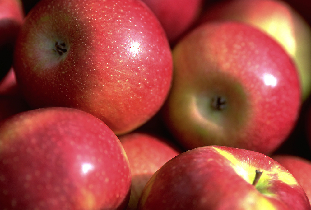 Close up selective focus photograph of a pile of Empire Apples