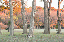 Autumn leaves at Keeton Park Golf Course, Great Trinity Forest and Piedmont Ridge, Dallas, Texas, USA