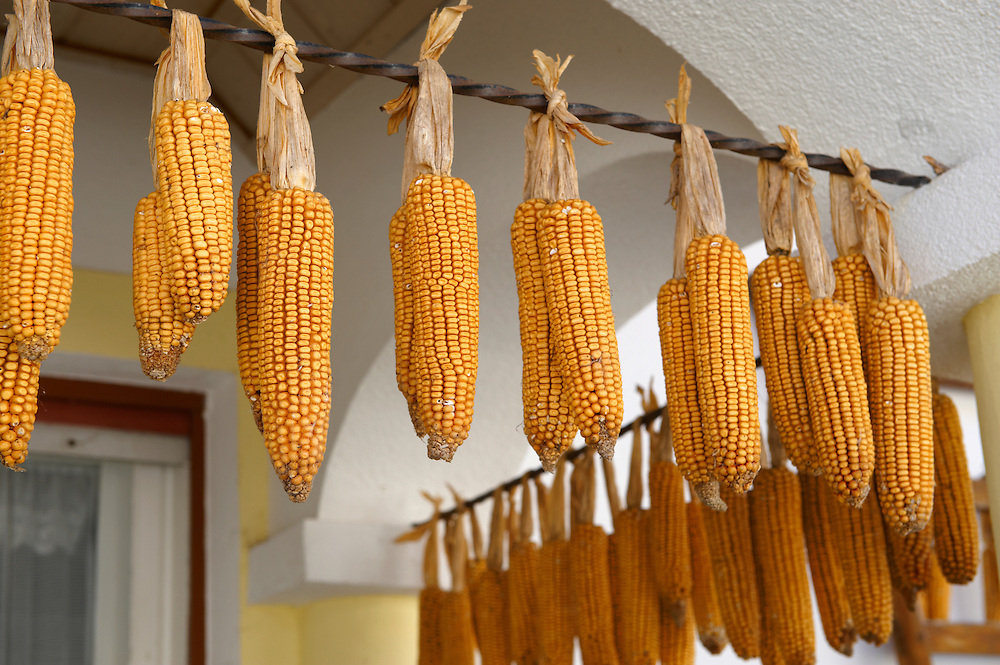 Corn drying outside a farm house at Morbish - am - see, Neusiedler See, Austria .<br /> <br /> Visit our AUSTRIA PHOTO COLLECTIONS for more photos to download or buy as wall art prints https://funkystock.photoshelter.com/gallery-collection/Pictures-Images-of-Austria-Photos-of-Austrian-Historic-Landmark-Sites/C0000VRQ9JIAzOxc