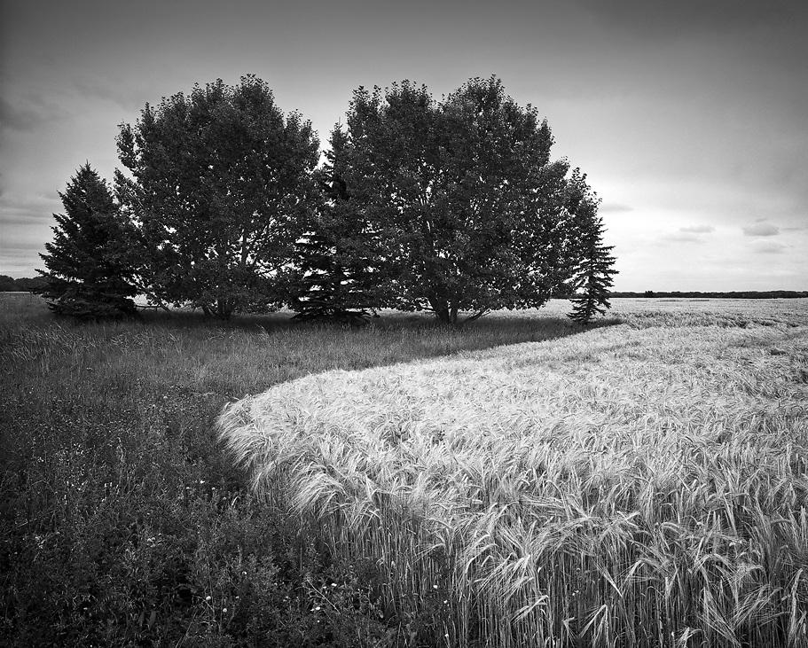 Curve of Grain