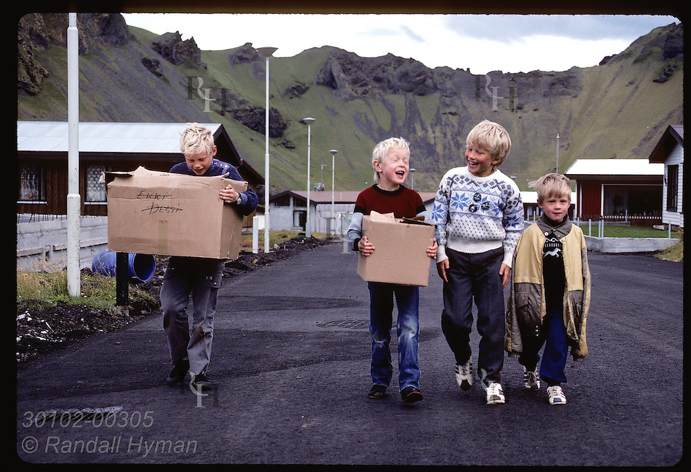 Boys carry boxes of puffin chicks-rescued night before- down road to release them on Heimaey shore Iceland