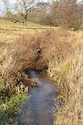 Shottisham Creek small stream flowing through lowland field, Sutton, Suffolk, England, UK