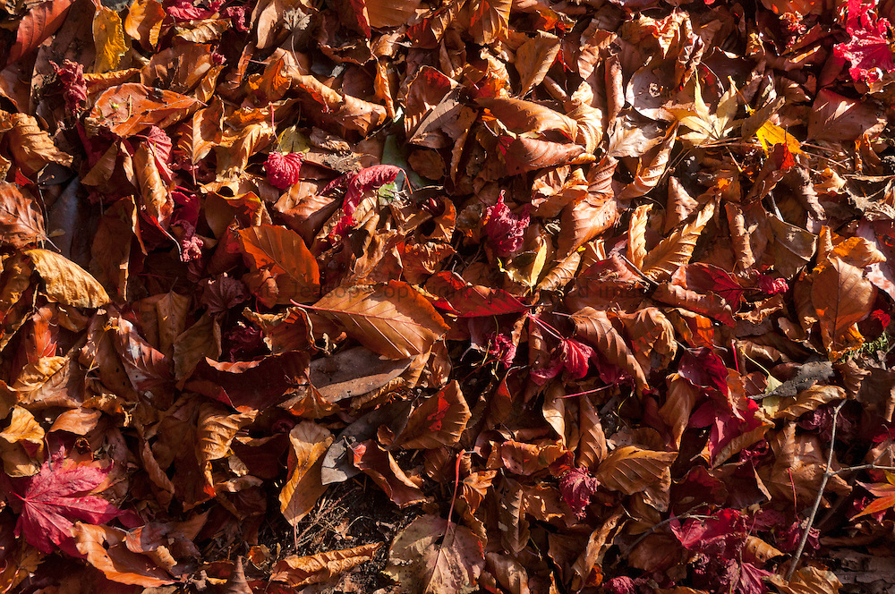 Late Autumn fallen leaves