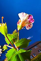 Flowers in the Scottish sunlight in a garden in Falkirk...