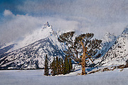 Snow covered valley floor and mountains in Grand Teton National Park featuring the Old Patriarch Tree, executed with an artistic effect and texture.