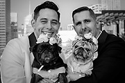 Groom and Groom together with their pugs