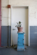house plant in a industrial buildings hallway