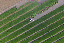 May 31, 2017 - Binzhou, Binzhou, China - Binzhou, CHINA-May 31 2017: (EDITORIAL USE ONLY. CHINA OUT)..Peasants are busy with farming in Binzhou, east China's Shandong Province, May 31st,2017. (Credit Image: © SIPA Asia via ZUMA Wire)