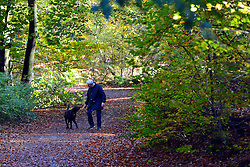 © Licensed to London News Pictures. 04/11/2013. Burnham, UK A man greets a dog on a walk. Autumn sunshine through the trees at Burnham Beeches, South Buckinghamshire on MONDAY 4TH NOVEMBER. The beeches covering 220 hectares is primarily noted for its ancient beech and oak pollards. Photo credit : Stephen Simpson/LNP