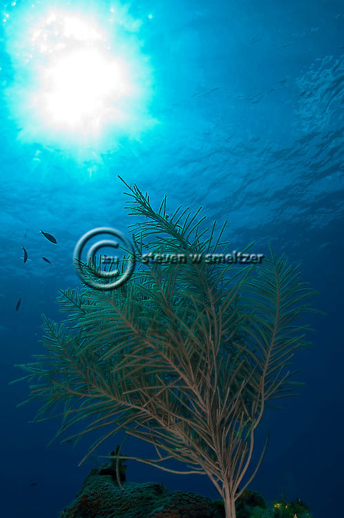 Soft Coral Garden, Grand Cayman, Roundabout