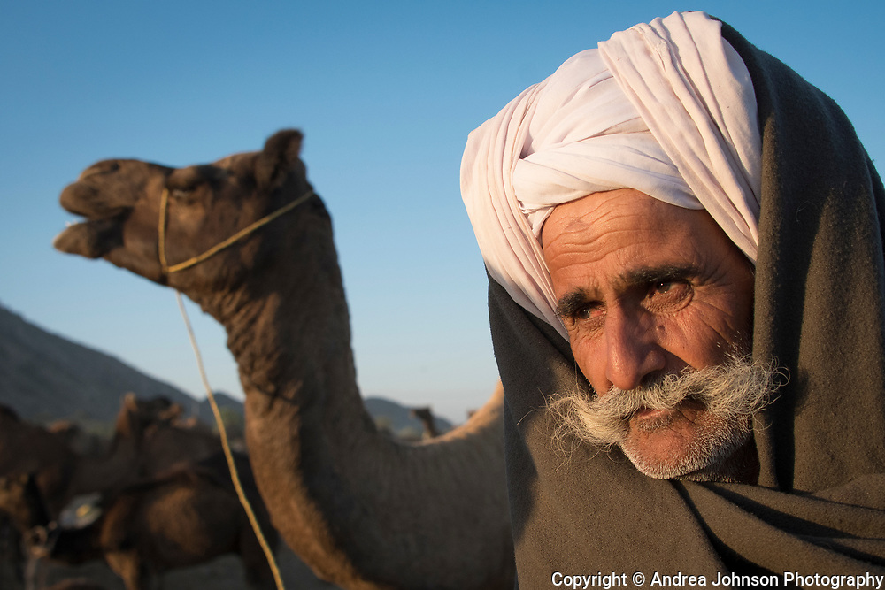Camel trader,  Pushkar,  Each November at the time of the full moon, historically over 11,000 camels, horses, and cattle are traded over this two week festival.  Rajathan, India