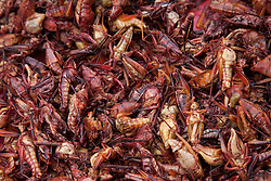 North America, Mexico, Oaxaca Province, Oaxaca, dried grasshoppers for sale in market