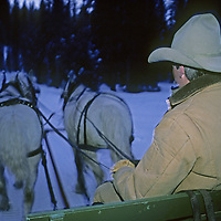 MONTANA, Big Sky. Sleigh ride driver heads into snowy woods at Lone Mountain Ranch.