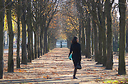 Along the Les Champs Elysees street park, tree lined allee, single woman in black in autumn Paris, France.