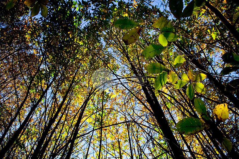 Parque Natural del Montseny. Barcelona. Catalunya. ©Carlos Sanchez Pereyra / PILAR REVILLA