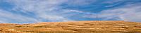 a powerline marches across a wheatfield in eastern Washington, USA