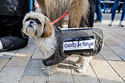 A dog wearing an ewoks for Europe placard joins pet owners to take part in an anti Brexit Wooferendum rally on October 07, 2018 in London, England to protest against Britain leaving the European Union.