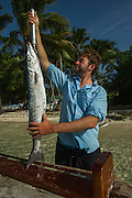 Great Barracuda (Sphyraena barracuda) Research<br /> MAR Alliance is performing population assessments on Sharks, Rays, and Great Barracuda to aid with management and protection. They are collecting samples to determine methyl mercury levels. Some samples will undergo staple isotope analysis allowing scientists to determine diet and trophic position in the marine food web.<br /> MAR Alliance<br /> Lighthouse Reef Atoll<br /> Belize<br /> Central America