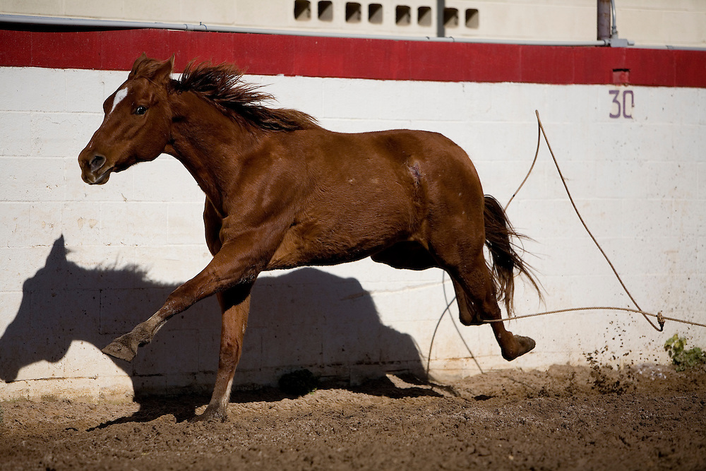 The Piales en El Lienzo demonstrates a charro's skill with the lasso, or reata. He must rope the hind legs of a wild mare running at full speed and bring it to a stop. The charro must have impeccable timing and technique.