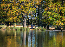 © Licensed to London News Pictures. 04/11/2014. Richmond, UK. A man looks at autumnal reflections in the ponds.  People and animals enjoy the warm sunshine in Richmond Park, Surrey today 4th November. Britain has experienced unseasonably warm weather recently.  Photo credit : Stephen Simpson/LNP
