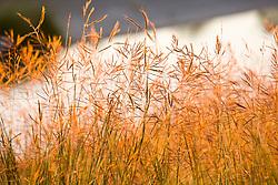 Golden light on the grass at Storey Park in Houston, Texas