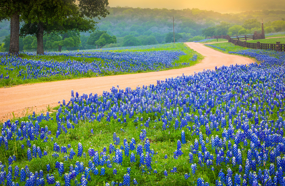 Country road in the Texas Hill Country east of Llano, Texas, lined by bluebonnets
