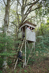 Young couple standing on lookout tower in a forest, Bavaria, Germany