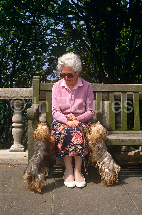 An elderly lady has been accompanied on a seafront walk by her beloved pet Yorkshire terriers. It is a warm late-summer's day in, ironically, the coastal North Yorkshire resort of Scarborough and the lady is wearing her favourite pink cardigan for her afternoon stroll with her pet dogs, both  friends and companions. She has paused to sit on a promenade bench, needing a coat or two of paint or varnish, to talk to the animals before continuing home. They are both on their leads and have put their front paws on her legs with equal attention to their proud master and owner.