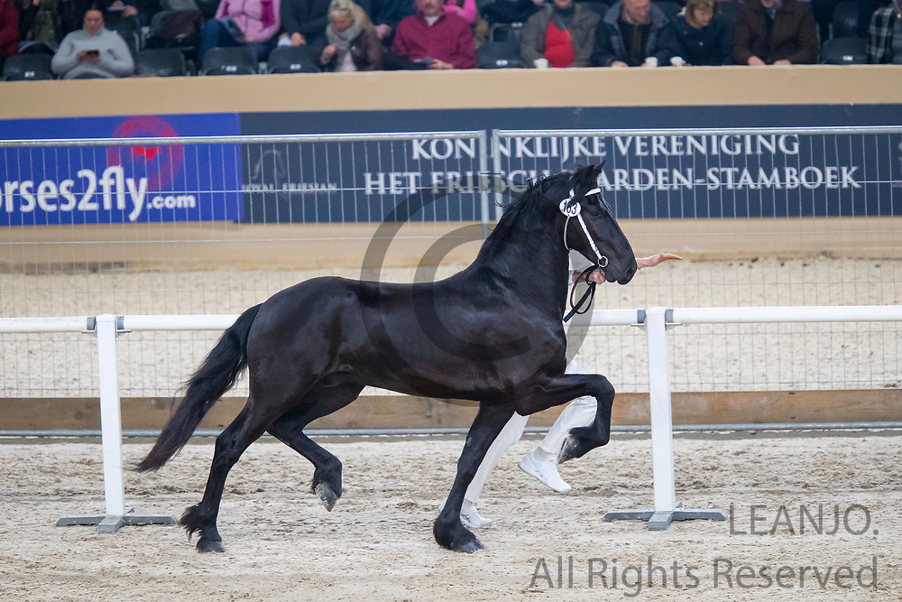 Age Diana A.B.<br /> KFPS Hengstenkeuring 2019<br /> © DigiShots