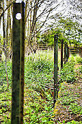 remains of an abandoned bridge in Weekley Hall Woods near Kettering