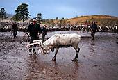 Reindrift Nord-Trøndelag - Reindeer herding