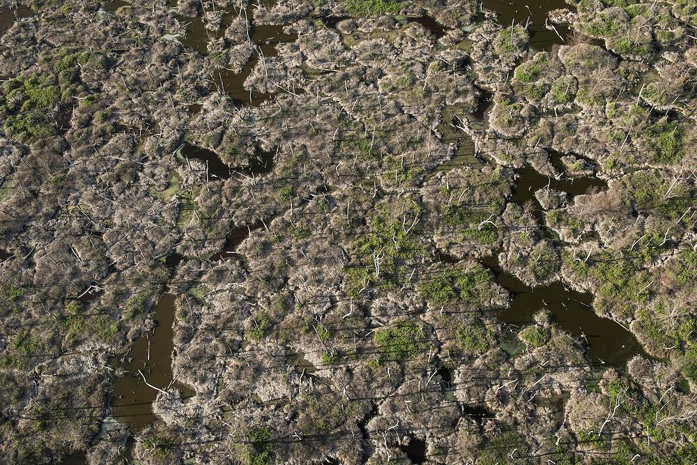 Coastal Wetland <br /> Abari Swamps<br /> Mahaica Miconi Abari<br /> GUYANA<br /> South America