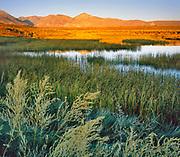 Spring-fed Ponds and Wetlands, DeChambeau Ponds, Mono Lake, Mono Basin National Forest Scenic Area, California