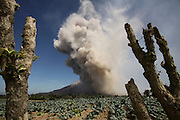 KARO, INDONESIA - JUNE 27: <br /> <br /> Eruption of Sinabung Mount Volcano in Indonesia<br /> <br /> A view of Sinabung mount eruption at Tiga Kicat village on June 27, 2015 in Karo regency, North Sumatra Province, Indonesia.<br /> Over 10,000 residents have been forced to evacuate preemptively over concerns of eruption from Mount Sinabung. The once dormant volcano has recently been observed displaying heightened activity.<br /> ©Ahmad Ridwan Nasution/Exclusivepix Media