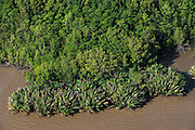 Mangroves<br /> Georgetown area<br /> GUYANA<br /> South America