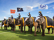 "29 AUGUST 2013 - HUA HIN, PRACHUAP KHIRI KHAN, THAILAND: Elephants take the field before the King's Cup Elephant Polo Tournament in Hua Hin. The tournament's primary sponsor in Anantara Resorts and the tournament is hosted by Anantara Hua Hin. This is the 12th year for the King's Cup Elephant Polo Tournament. The sport of elephant polo started in Nepal in 1982. Proceeds from the King's Cup tournament goes to help rehabilitate elephants rescued from abuse. Each team has three players and three elephants. Matches take place on a pitch (field) 80 meters by 48 meters using standard polo balls. The game is divided into two 7 minute ""chukkas"" or halves. There are 16 teams in this year's tournament, including one team of transgendered ""ladyboys.""    PHOTO BY JACK KURTZ"