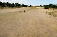 ZANDVOORT  - bruine droge fairways  van de Kennemer G &CC, hole A7, omdat de fairways niet gesproeid worden.  COPYRIGHT  KOEN SUYK Copyright Koen Suyk