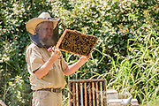 Rick Sutton, owner of Sutton Honey Farms in Lancaster, Ky., visits a bee yard near the radio towers and satellite dishes of the Hometown Radio Network, Tuesday, Sept. 8, 2020 outside Danville, Ky. (Photo by Brian Bohannon)