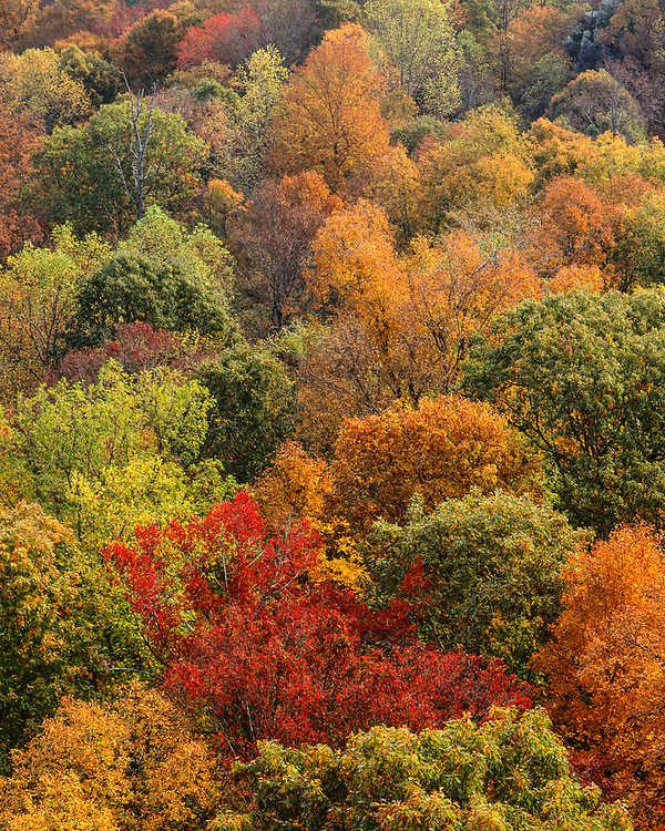 Deciduous forest, autumn, Great Smoky Mountains National Park, Tennessee, USA