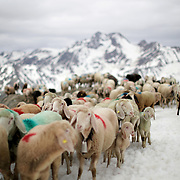 Around dawn, the shepherds gather near the Italian town of Maso Corto and prepare to take their sheep into Austria, along an Alpine track centuries older that the border they are crossing.<br /> <br /> Over the next ten hours, they climb 800 meters (2,600 feet) to the Hochjoch pass, corralling their animals over snowfields, along narrow, rocky paths and at one point, across a suspension bridge, single file.<br /> <br /> By the end of it, the 1,500 sheep reach their summer pastures in Oetztal - a 16km (10-mile) trek from one valley to another that has survived wars and outlasted empires.