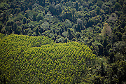 Aerial view of a eucalyptus tree farm and rainforest in Jambi Province, Indonesia, July 4, 2009.
