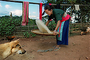 In Ban Mai, Laos rices hulls blow away from the kernel when shaken by this Hmong girl in December 2000. Rice is the staple of the Hmong diet and the main crop they grow.