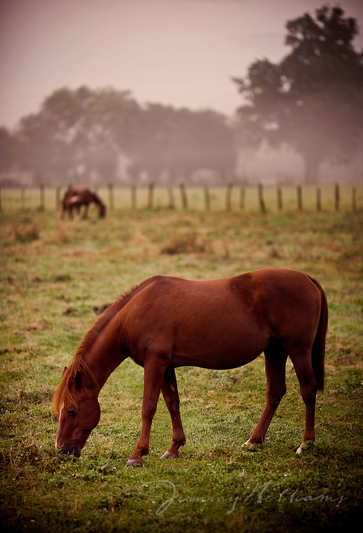 Horses graze in a pasture full of large trees in the countryside of France