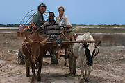 Pete Oxford and Renee Bish in traditional Zebu (ox) cart used to take people across Lake Tsimanampetsotsa in the wet season.<br /> Tsimanampetsotsa Special Reserve. South-west desert of MADAGASCAR<br /> In the countryside where roads are bad - especially during the rainy season- this is often the only means of transport. Obviously poorer people also do not have vehicles and rely on this form of transportation.