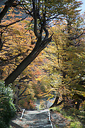 Path between trees on autumn day, Torres del Paine National Park, Chile